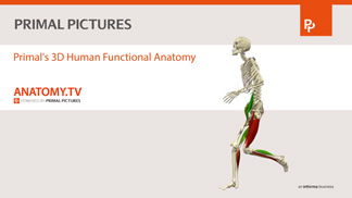Human Anatomy Package movie
